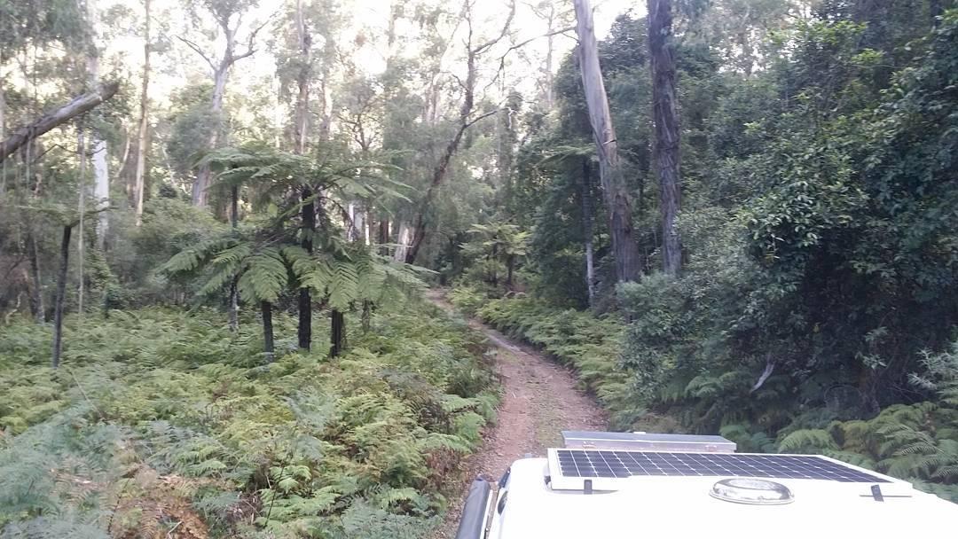 Wadbilliga state forest wadbilliga farsouthcoast bermagui camperhire camper duea dueanationalpark